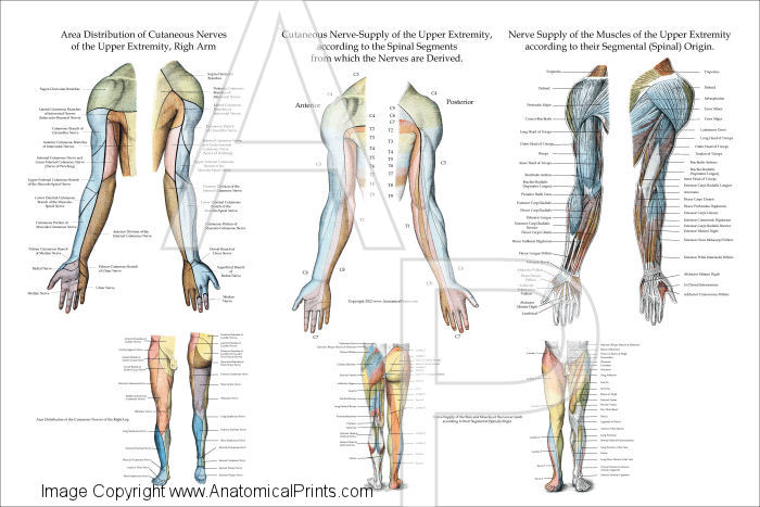 Upper Extremity Poster