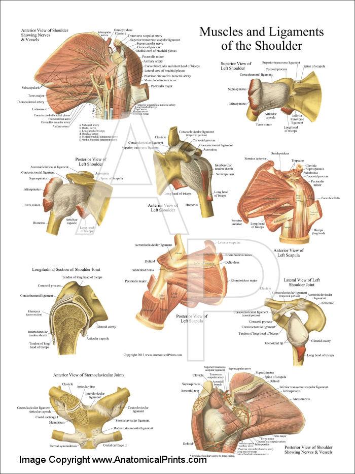 Equine anatomy posters
